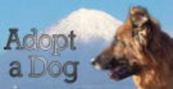 Adoptadog_bnnr