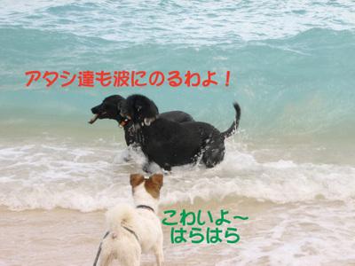 Photo_135