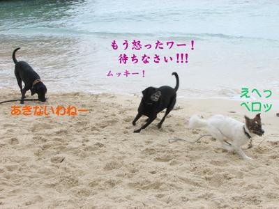 Photo_93